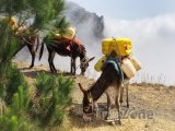 Osel nesoucí kanystry s vodou v mlžných horách