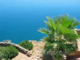 Palma na pobřeží poblíž Antalye