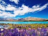 Pohled na jezero Tekapo v regionu Canterbury