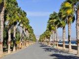 Promenáda s palmami - Limassol