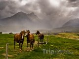 Region Taranaki a koně na louce
