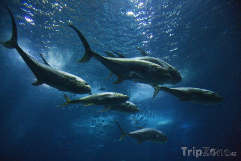 Fotka, Foto Ryby v lisabonském oceanáriu (Lisabon, Portugalsko)