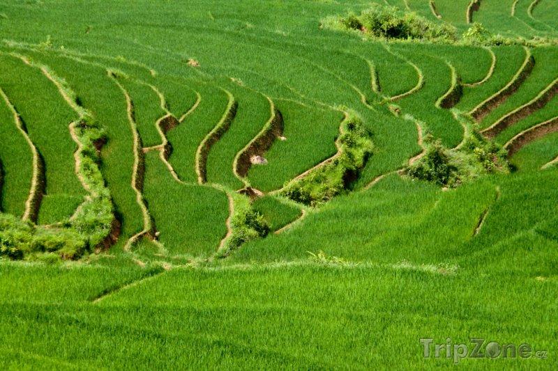 Fotka, Foto Rýžové plantáže na severu země u města Sapa (Vietnam)