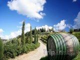 Toskánská vinice