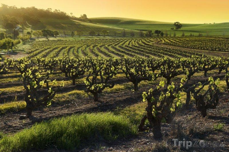 Fotka, Foto Vinařská oblast Barossa Valley (Austrálie)