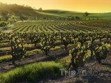 Vinařská oblast Barossa Valley