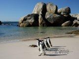 Kapské město - tučňáci na Boulders beach