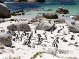 Kolonie tučňáků na Boulders beach