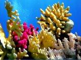Korálový útes u pobřeží