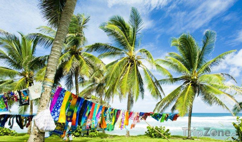 Fotka, Foto Palmy na pobřeží Saint Joseph Batsheba (Barbados)