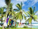 Palmy na pobřeží Saint Joseph Batsheba