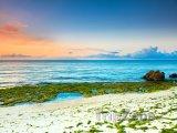 Mořské řasy u pláže