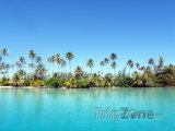 Palmy na břehu ostrova Raiatea