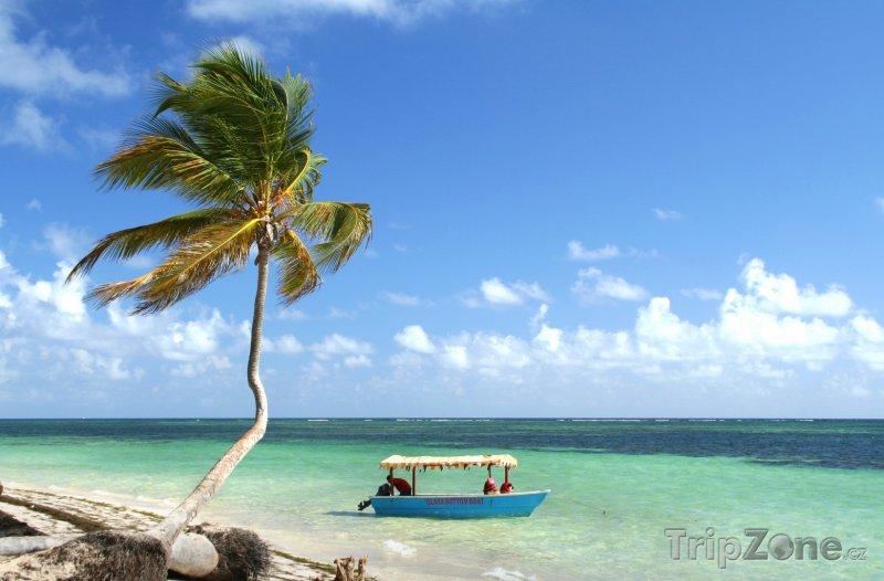 Fotka, Foto Punta Cana, palma a loďka (Dominikánská republika)