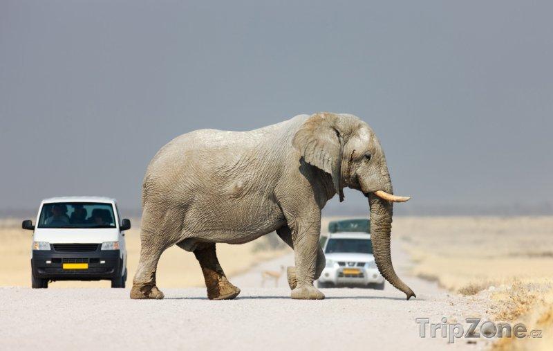 Fotka, Foto Slon přechází silnici v Národním parku Etosha (Namibie)