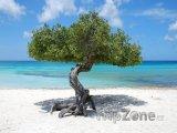 Strom na pláži