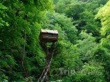 Chaloupka na stromu