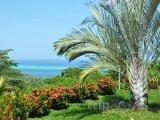 Flora ostrova Roatán