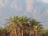 Palmy a jezero na ostrově Socotra