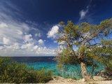 Strom Mesquite na pobřeží