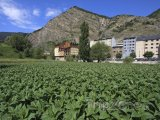 Tabáková plantáž ve městě Canillo