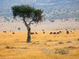 Antilopy v parku Masai Mara