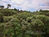 Džungle
