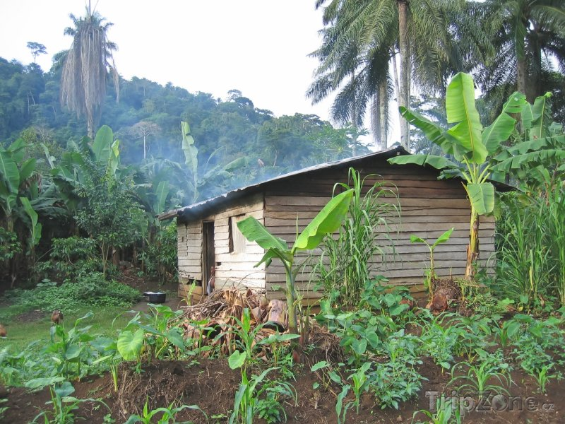 Fotka, Foto Farmářský domek v džungli (Kamerun)