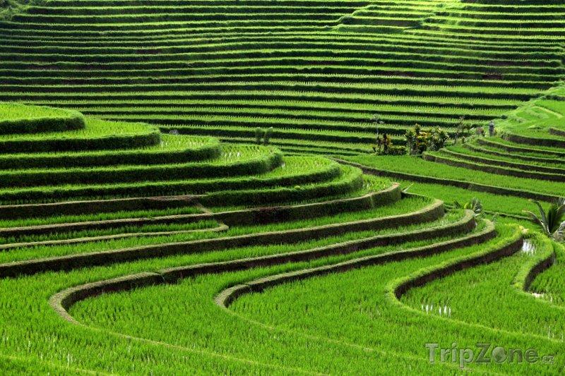 Fotka, Foto Rýžové terasy na Bali (Indonésie)