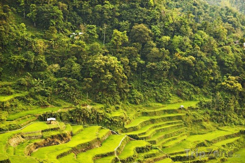 Fotka, Foto Rýžové terasy (Filipíny)