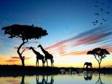 Safari v západu slunce