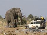 Slon africký u Jeepu