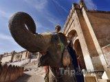 Slon u pevnosti Amber v Džajpuru