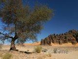 Strom a pohoří Ahaggar na Sahaře