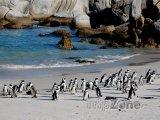 Tučňáci na pláži