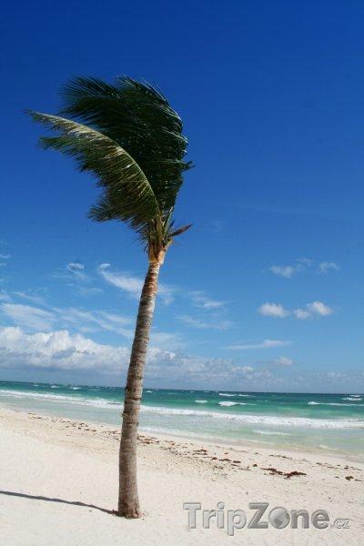 Fotka, Foto Tulum, palma na pláži (Mexiko)