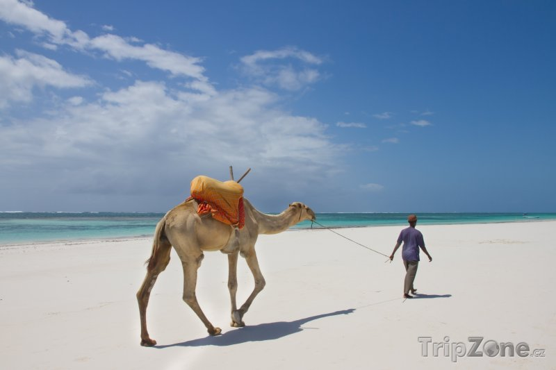 Fotka, Foto Velbloud na Diani Beach (Keňa)
