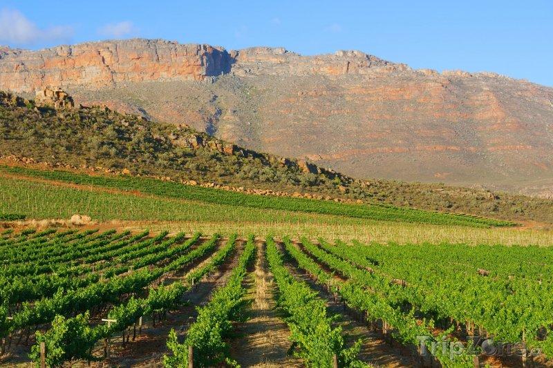 Fotka, Foto Vinice v pohoří Cederberg (Jihoafrická republika)