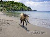 Kůň na pláži