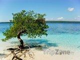 Mangrovy na pláži Cayo Sombrero