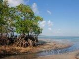 Mangrovy na pobřeží města Vilankulo