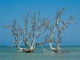 Mangrovy v moři u vesničky Tsifota