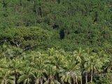 Prales na ostrově Malakula