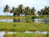 Savaii, močál a palmy