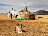 Tradiční mongolské jurty