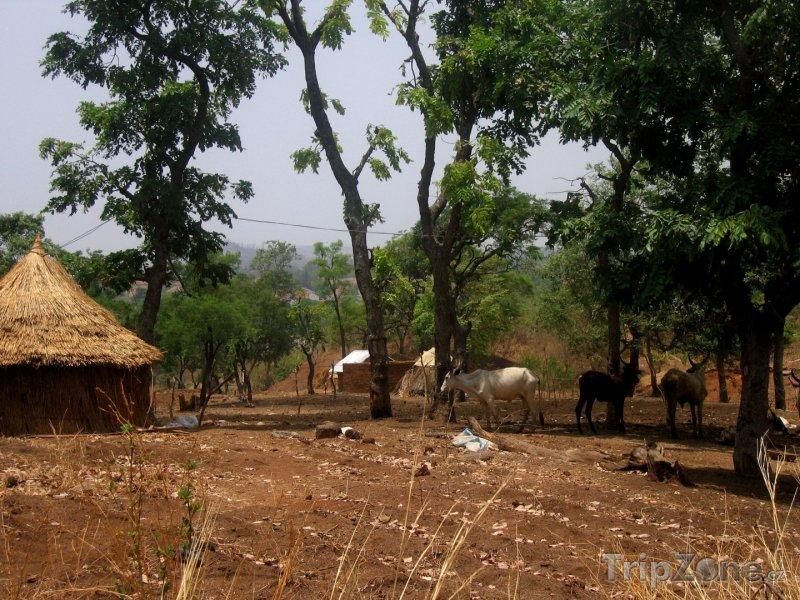 Fotka, Foto Tradiční vesnice v Nigérii (Nigérie)