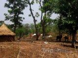 Tradiční vesnice v Nigérii