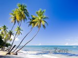 Trinidad, palmy na pláži
