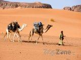 Velbloudi v libyjské poušti