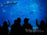 Georgia Aquarium, největší akvárium na světě
